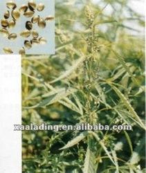 hemp seed extract