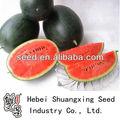 شيوى f1 زراعة بذور البطيخ الهجين