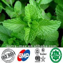 100% Wild Mint Extract Powder