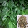 Mulberry leaf extracts