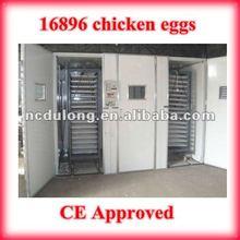 12096 huevos de pavo de caliente venta de huevos de codorniz agricultura