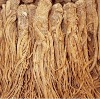 Natural Angelica extract