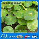 Centella asiatica extract(Asiaticoside/Madecassoside)