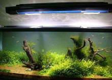 Hot sell !!24inch intelligent remote 120w led aquarium lights with sunrise sunset and lunar cycle