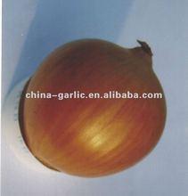 China Onion Wholesale Price 2012