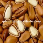 Chinese pine nuts in shell