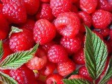 Cosmetic material!Raspberry Extract Raspberry ketone glucoside