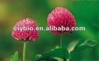 extrait de trefle rouge biochanine A