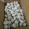 AJO/ALI/ALHO/chinese normal white garlic price China Garlic