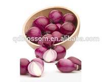 China fresh red onion sale