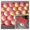 2014 china fresh crisp apple sweet fresh red gala apples in bulk in high quality