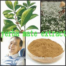 yerba mate extract ,yerba mate extract powder,mate extract