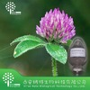 8%,20%40% Hplc Isoflavones from Red Clover Extract manufactures