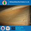 Cheap rotary cut pine wood veneer / pine veneer