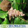 GMP Factory 100% Natural 95%-98%Tannic Acid Powder Gallnuts Extract Powder Tannic Acid/100% Natural Gallnuts Extract Tannic Acid