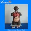 60cm African Human Body