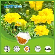 Preço favorável 5% flor de calêndula extrato xantinas