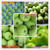 Green smith apple fruit fresh apple fruit in high quality
