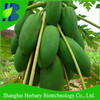 2014 Hybrid F1 High Yield Red Lady Papaya Seeds For Growing