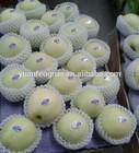 new crop 2014 Golden Delicious apple 80-88-100-113-125