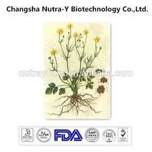 Pure Natural Cat's Claw Extract Ranunculus ternatus Thunb. P.E.