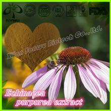 Natural echinacea extract/echinacea purpurea extract/polyphenol 4.0%