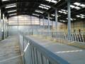 Pré-fabricadas de ovelha galpão, gado galpão, ovinos casa