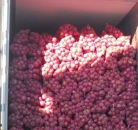 China 2014 Yellow Organic Fresh Red onion With Best Price For Sale
