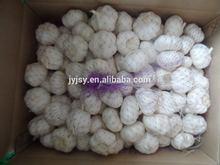 fresh garlic for 2014 new crop