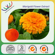 Factory supply marigold flowwer extract,eyesight protection 10%~98% lutein,NATURAL marigold flower extract lutein