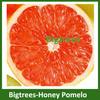 import fruit honey pomelo from Fujian