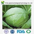 Kräuterergänzung grünkohl-extrakt