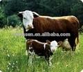 grado de la alimentación concentrada hidrolizado de proteína de soja para la alimentación animal
