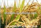 Rice bran extract natural ferulic acid 98% HPLC