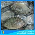Gefrorene tilapia-fisch