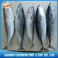 de pescado congelado bonito con los precios