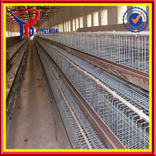 professional chicken egg layer cages in south africa