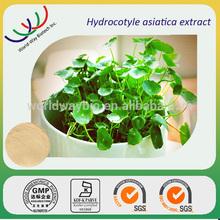 Gotu kola P.E,free sample HACCP KOSHER FDA China supplier HPLC 90% asiaticosides centella asiatica