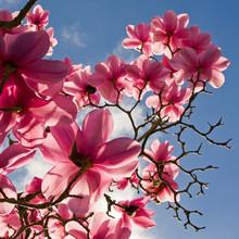 Home decor beautiful art magnolia flower oil painting