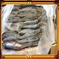 نوعية جيدة السردين المجمدة الأسماك/ السردين المعلب
