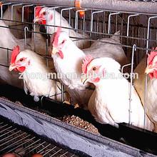 outdoor chicken coop/triangle chicken coop/large wooden chicken coop