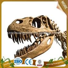 Museum park life-size real dinosaur skull