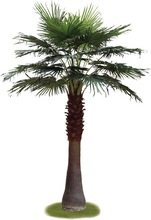 On sale!! High Quality Artificial Chinese Fan Palm Trees