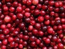 frozen lingonberry/red cherry good quality from China