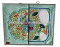 Ultra estrutura zoológico e Botanic celular modelo