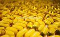 حمض الهيالورونيك كبسولة، شهادة gmp الكالسيوم سوفتغيل تكملة التغذية