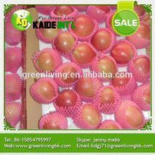 Big Size Gala Apple Fruit