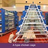 Large scale automatic poultry cages l/Hot-sale good quality poultry farm /chicken farm poultry equipment