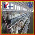 Profissional automática de tipos de galinhas poedeiras( iso9001 fábrica)