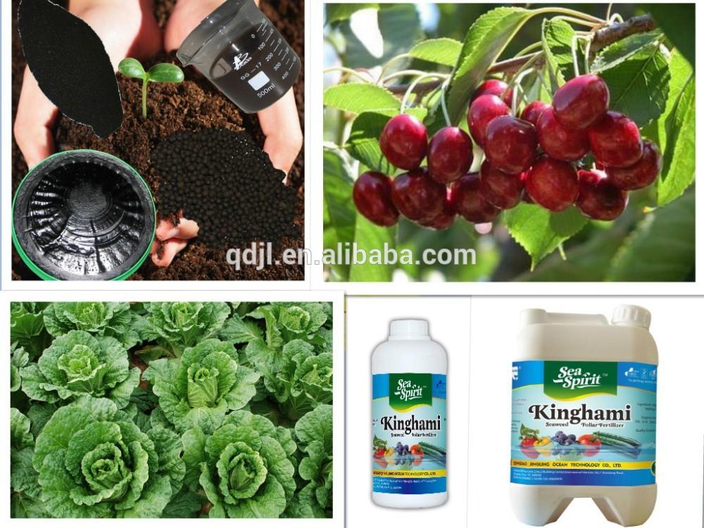 Example Organic Fertilizer Organic Npk Fertilizer